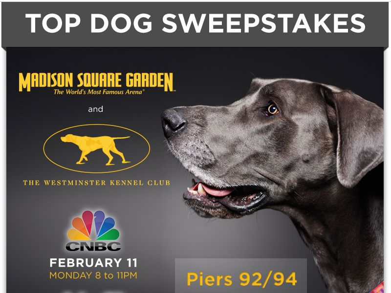 Westminister Kennel Club Top Dog Sweepstakes