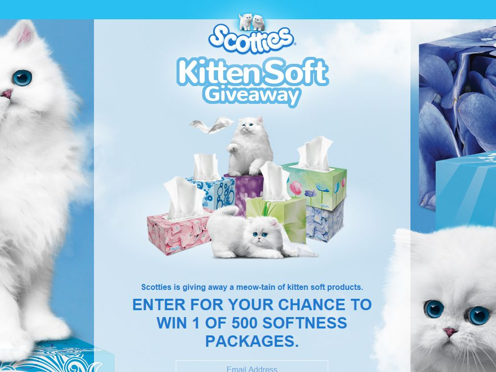 Scotties Kitten Soft Giveaway