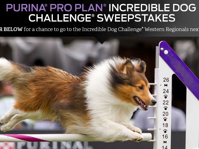 The Purina Pro Plan Incredible Dog Challenge Sweepstakes