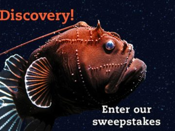 World Ocean's Day 2018: Dive Into Ocean Discovery Sweepstakes