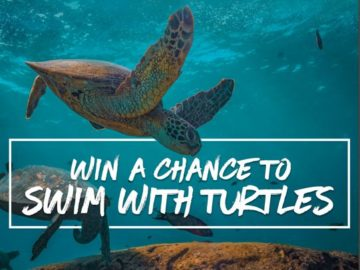 TRTL Swim with Turtles Sweepstakes