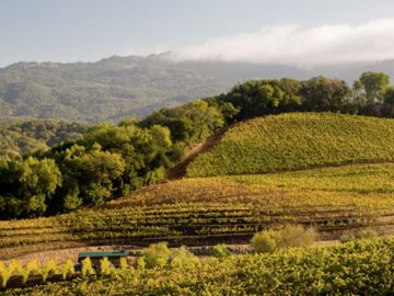 Benziger Family Winery VIP Tour Sweepstakes