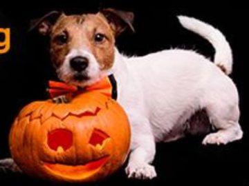 1-800-PetMeds Tricks for Treats Sweepstakes