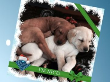 Blue Pet Food Naughty or Nice Contest