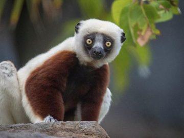Playmonster Orangutwang San Diego Zoo Sweepstakes