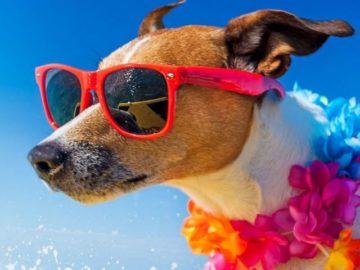 Debt.com $3,000 Summer Cash Splash Giveaway
