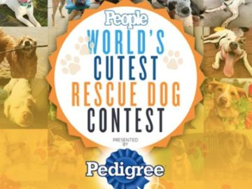 People Magazine's World's Cutest Rescue Dog Contest (Creative Submission)