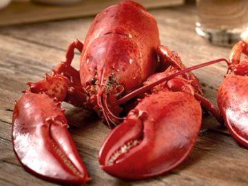 Get Maine Lobster Trip Giveaway