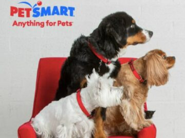 PetSmart Anything for Pets Contest (Photo)