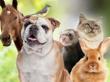 Yummy Pets America's Favorite Petshop Sweepstakes