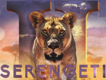 Discovery+ Serengeti $20K Safari Sweepstakes