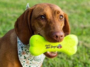 A&W Rooty's Hot Dogs Toy Sweepstakes