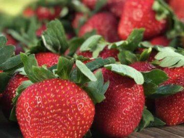 Farm Star Living Florida Strawberry Sweepstakes